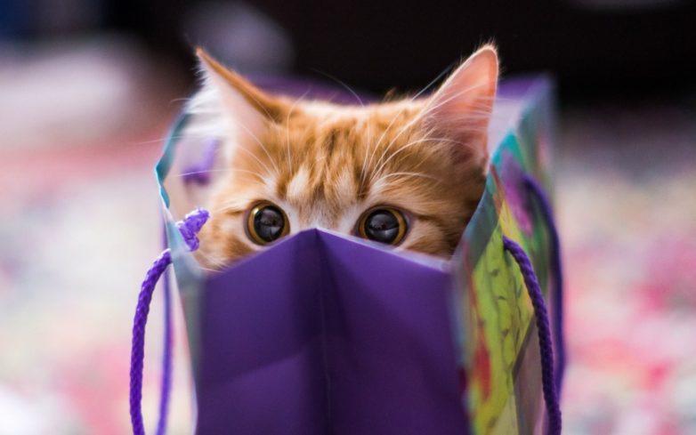 Котейка в коробейке: почему котики обожают коробки