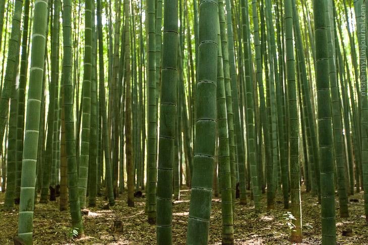 Прогулка по сказочной бамбуковой роще в Киото