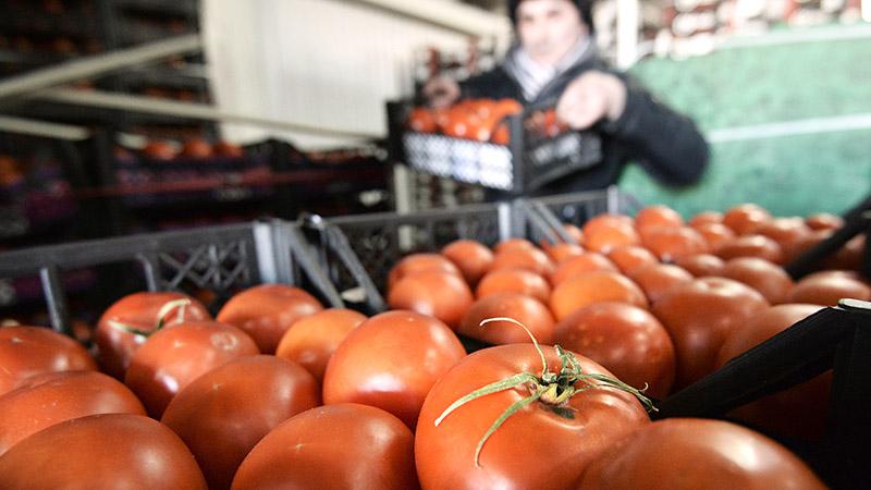 Помидоры нафаршировали пестицидами