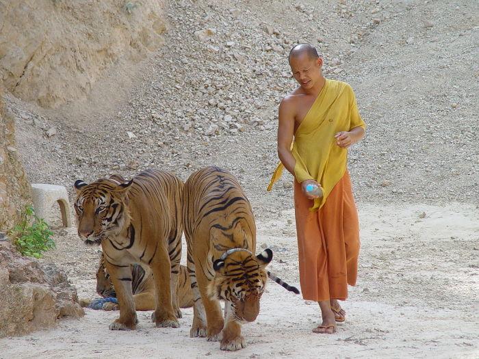 Как поклоняются животным в разных странах
