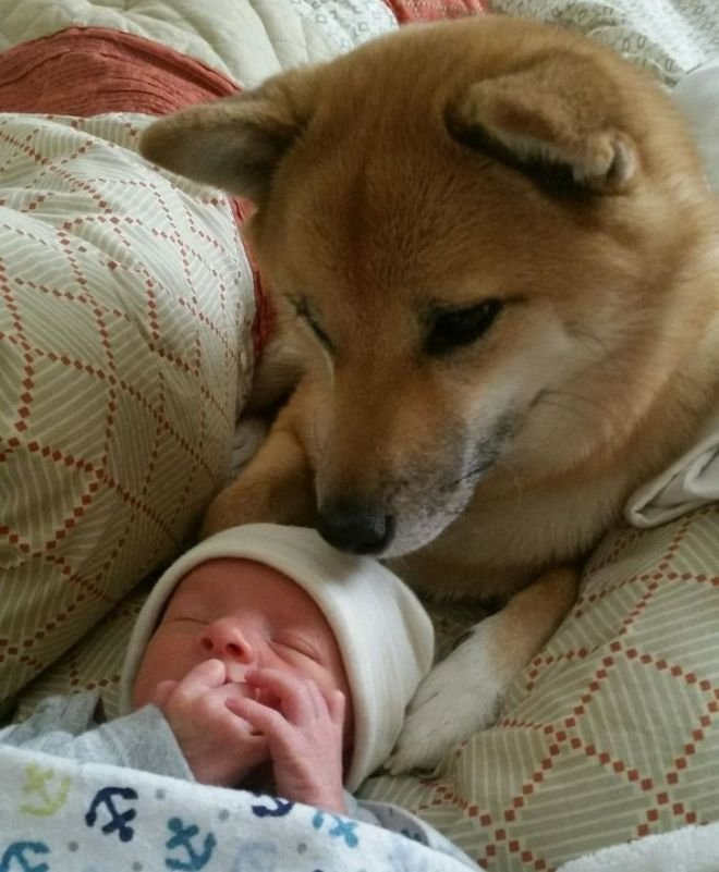 Любовь с первого взгляда. животные, собаки, это интересно