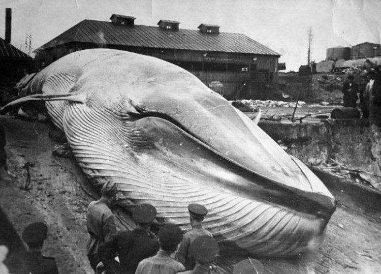 Цунами 1952 года на Курилах. история, классика, фото