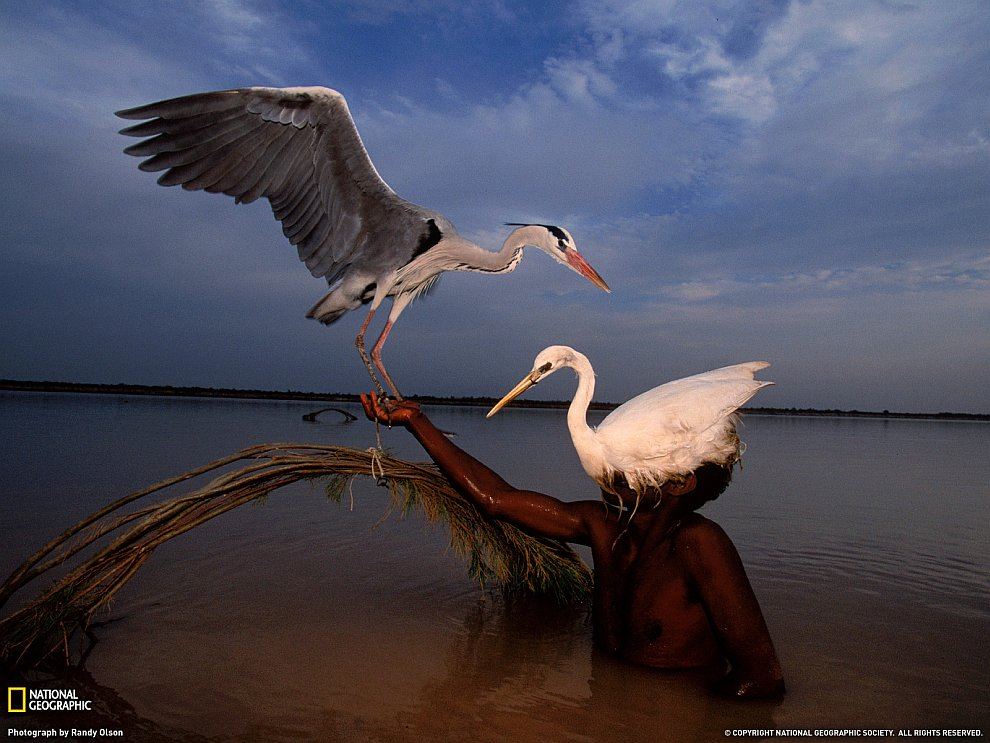 Охотник на птиц, Пакистан