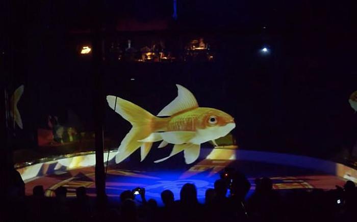 Один из цирков в Германии использует голограммы вместо животных