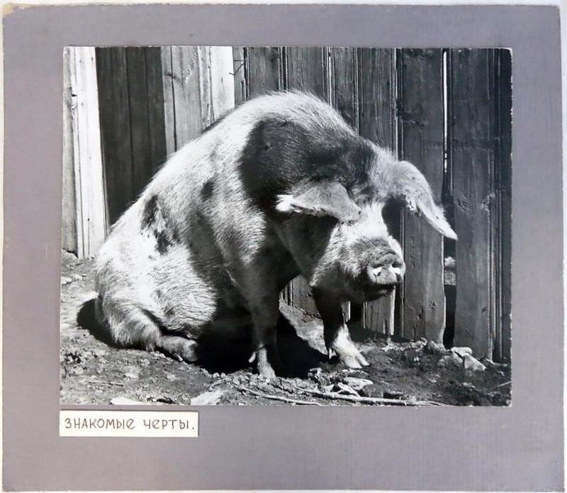 Снимки 1960-70-х годов фотографа-этнографа Георгия Аргиропуло 17