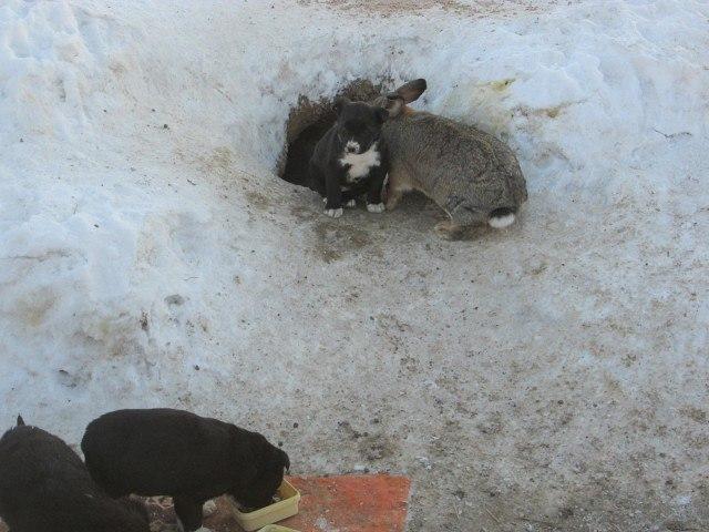Сбежавший с фермы кролик заменил маму осиротевшим щенкам