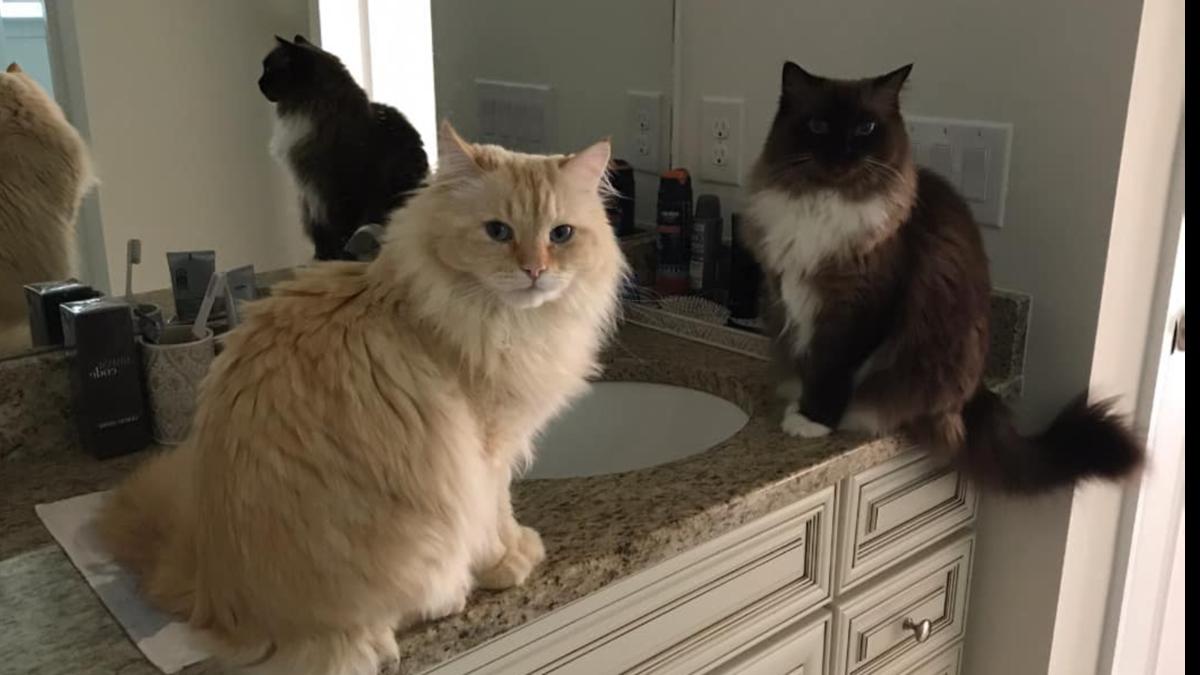 Сила кошек. Как они чувствуют человеческие болезни и как о них предупреждают