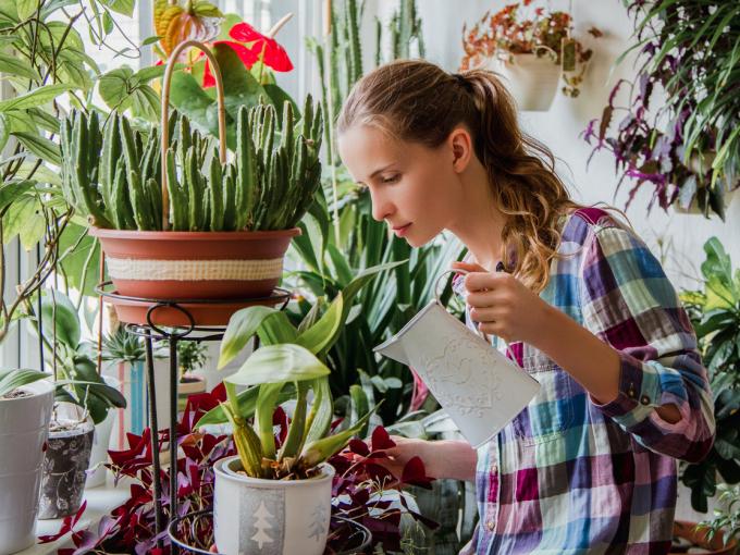 Как поливать комнатные растения, когда вы в отъезде