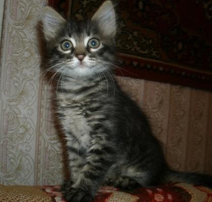 Про котёнка