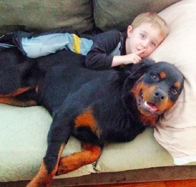Пес и мальчик
