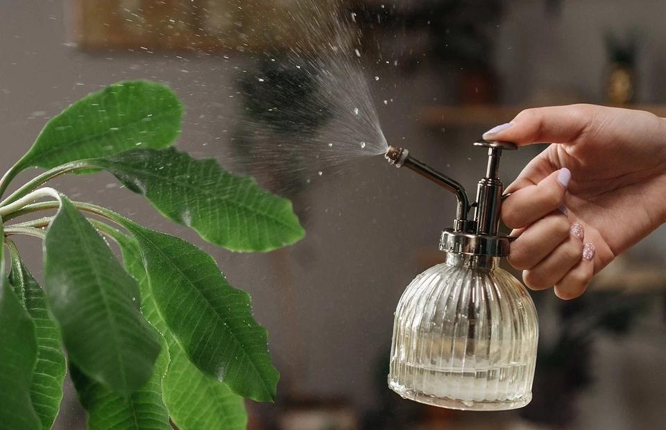 Как избавиться от мошек в квартире раз и навсегда: 5 способов лайфхак,насекомые,полезные советы