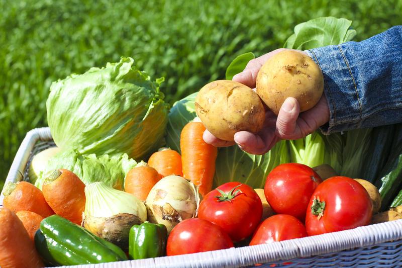 Как повысить урожай овощей? Тонкости и хитрости выращивания
