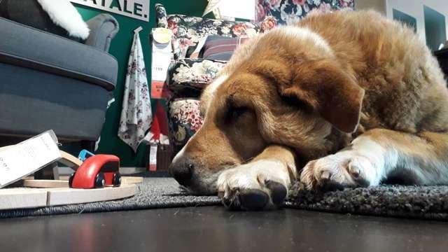 Магазин IKEA в Катании открыл свои двери бездомным собакам, чтобы защитить их от холода