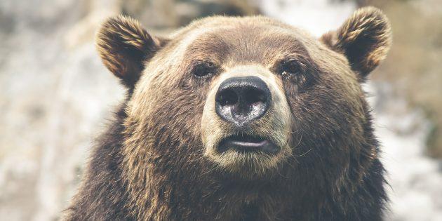 Идеальные распорядки дня медведей, львов, волков и дельфинов