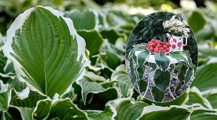 Как сделать за 5 минут красивую растительную скатерть для дачного праздника для дома и дачи,мастер-класс