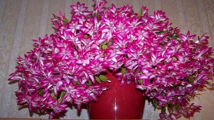 Ваши цветы будут великолепны! Подкормка для домашних растений