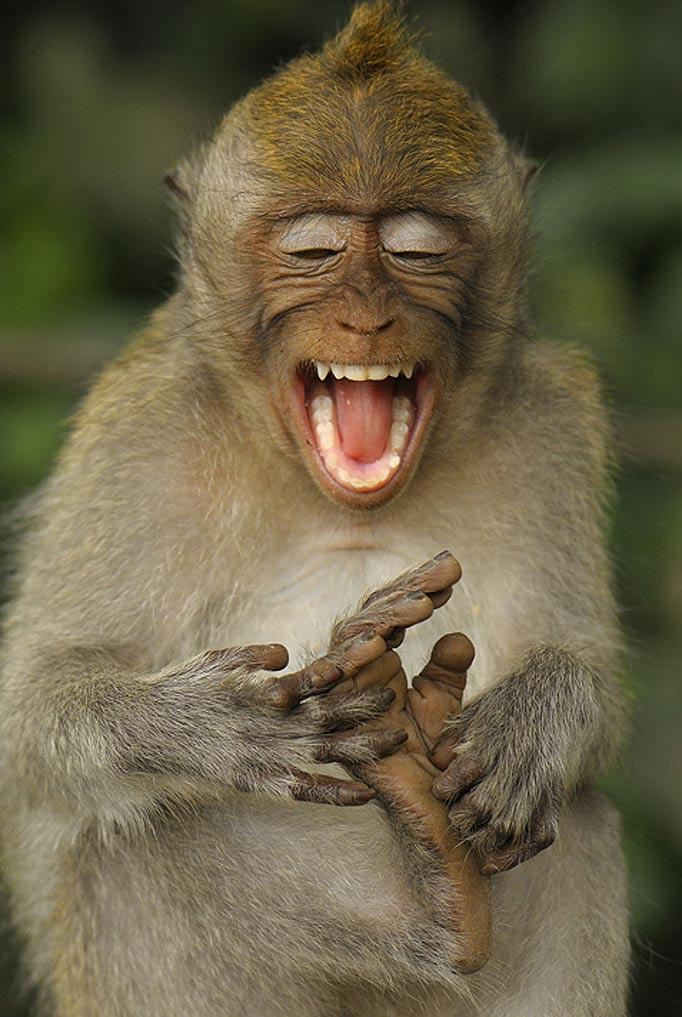 Забавные фото приколы и смешные картинки для улыбки красивые фотографии,приколы,угарные фотки,фото приколы