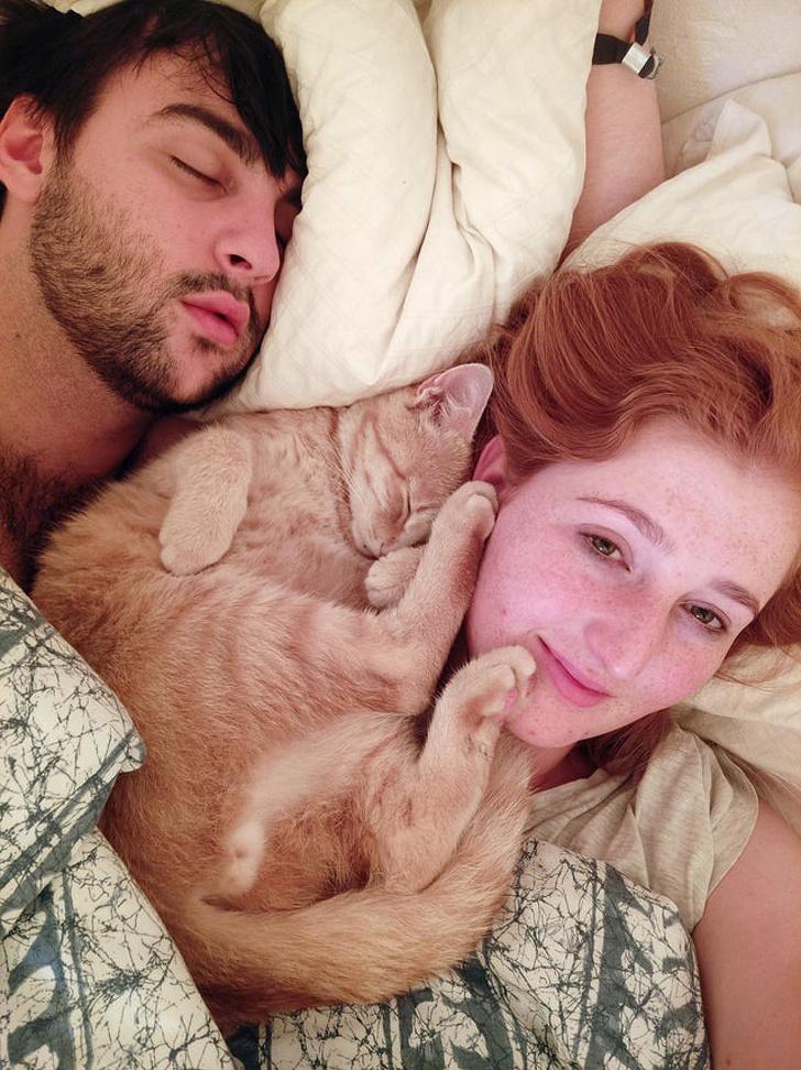 Беспардонные коты, которые каждый день проверяют хозяев на прочность