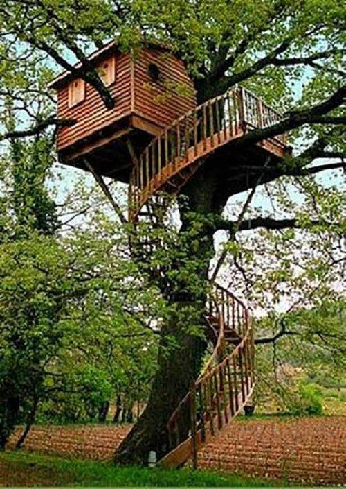 Дома на деревьях, о которых почти каждый мечтал в детстве