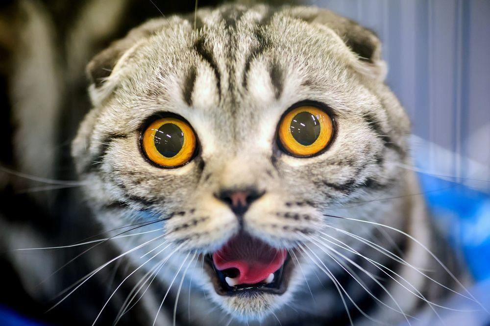 Прикольные картинки с большими кошками