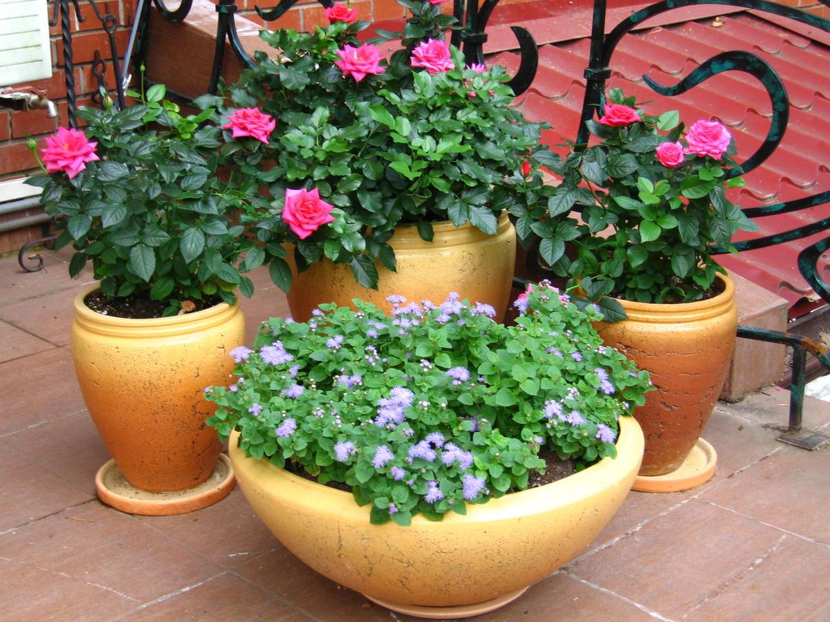 Как обустроить патио в английском стиле: выбор растений и дизайн
