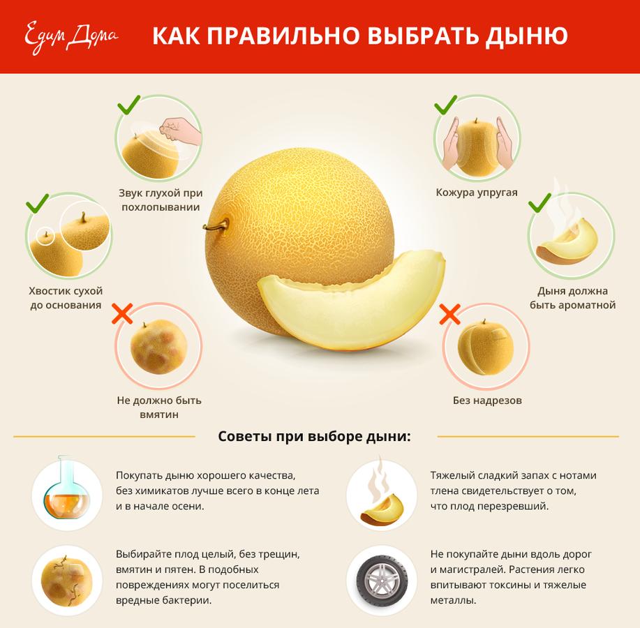 Как правильно выбрать дыню: инфографика полезные советы
