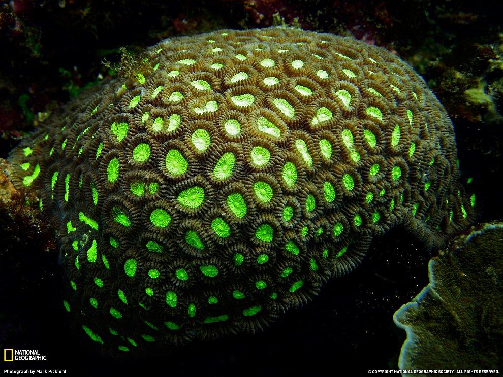 Кораллы в Индонезии