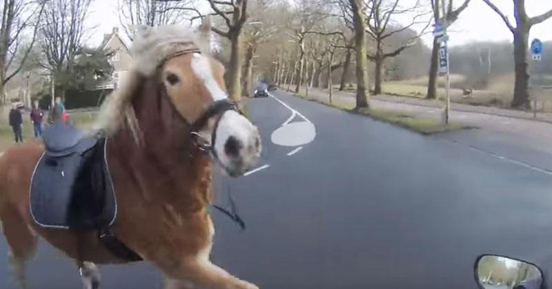 Лошадь убежала от хозяйки. П…