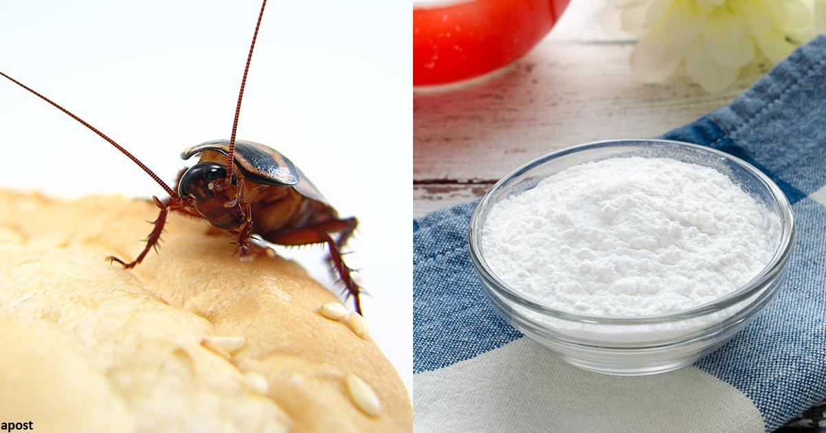 4 еÑтеÑтвенных ÑпоÑоба избавитьÑÑ Ð¾Ñ' тараканов в доме раз и навÑегда