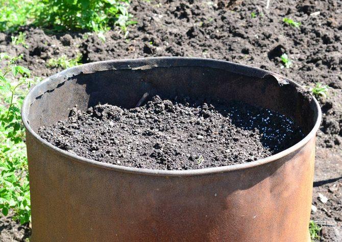 Агротехника выращивания тыквы в бочке