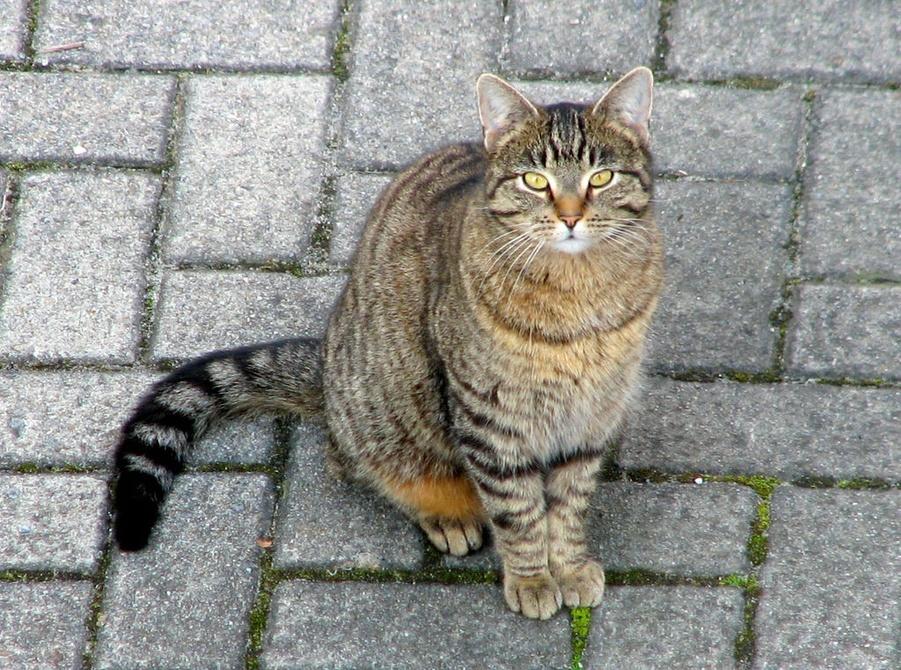 История кота Обормота (байка из жизни). Кошка и человек - истории, легенды и поверья о кошках