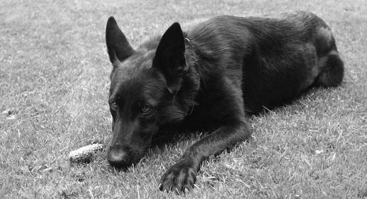 Она панически боялась этого черного пса, но именно он стал ее талисманом и помог изменить жизнь