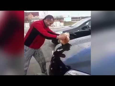 Полиция Кубани разыскивает мужчину, помывшего свой Mercedes котом