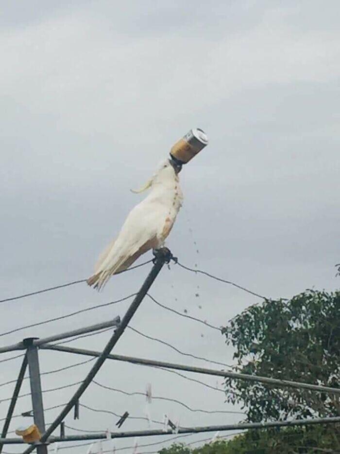 20 смешных и жутких фотодоказательств того, что Австралию тоже ни умом не понять, ни аршином общим не измерить Австралии, земля, бегают, проклята, птицы, ничего, очень, Австралия, Австралии», жарко, общего», которое, иметь, лебеди, животные, прыгают, больше, летают, белые, черные