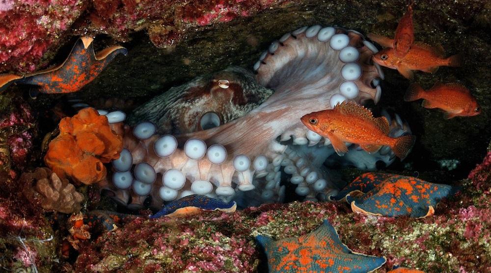 Подводный мир прекрасен 6