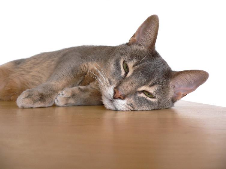 Если пыль где-то есть, кошка её найдет