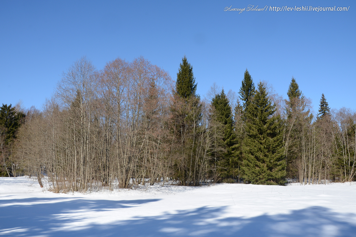 Прощание с мартовским лесом