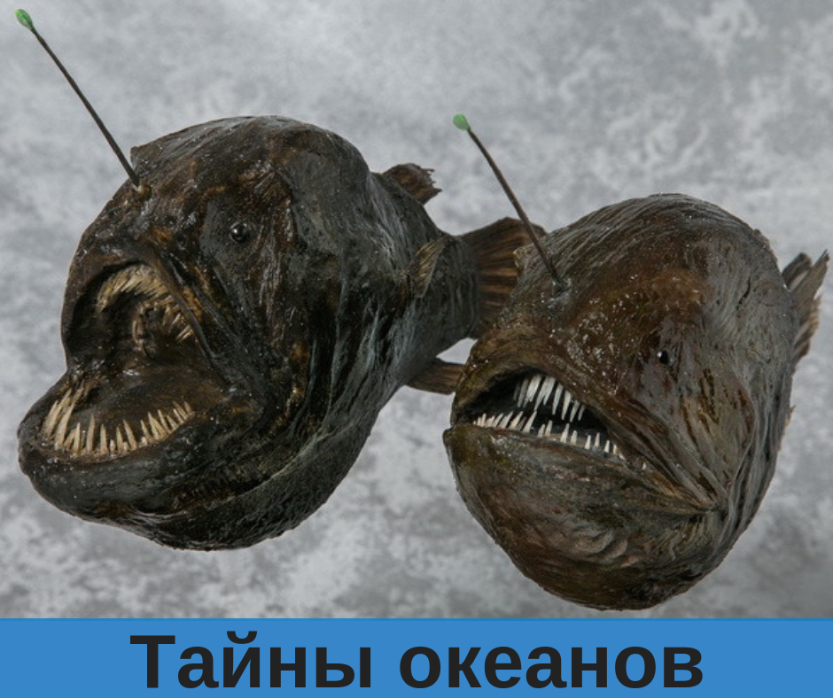10 самых необычных обитателей подводного мира