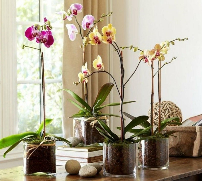 Орхидеи в доме - сильный женский оберег! Вот все, что о них надо знать