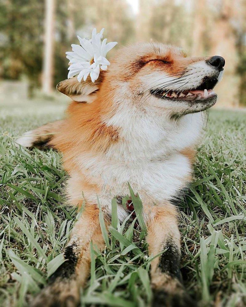 начала лишним картинка счастливый лис заметил