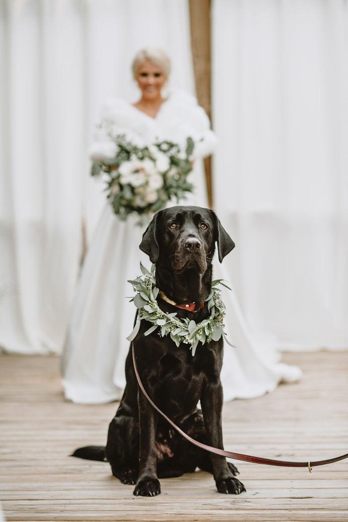 Проявление искренней радости пса за свою хозяйку невесту