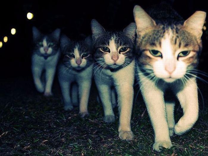 Реальные коты:  фотографии д…
