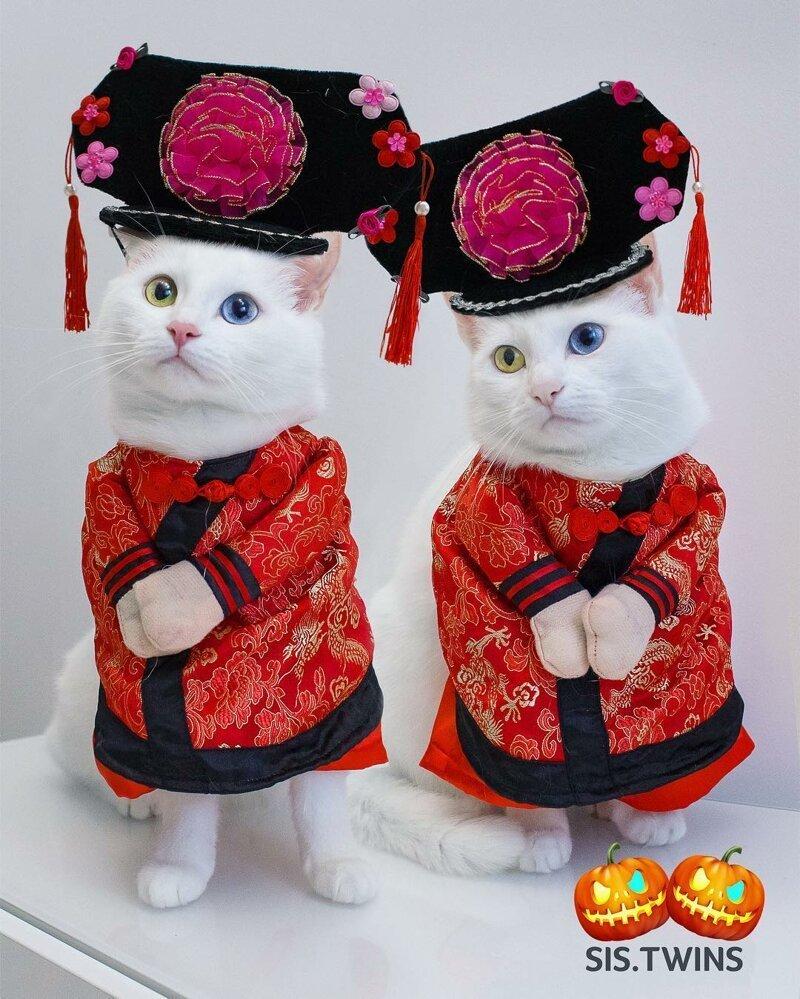 Белые сестрички с невероятными глазами: Айрис и Абисс Абисс, Айрис, глаза, кошка, красота, окрас