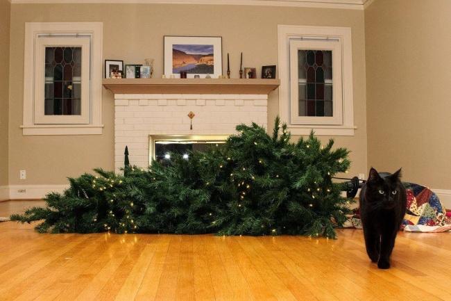 Домашние питомцы которые  не притворяются, что им близок дух  рождества