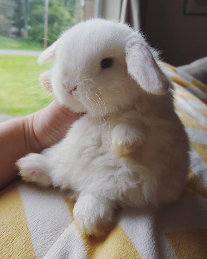 5. Кролики это не только ценный мех, детеныш, детеныши, детеныши животных, кролик, кролики, пушистый позитив, ушастый