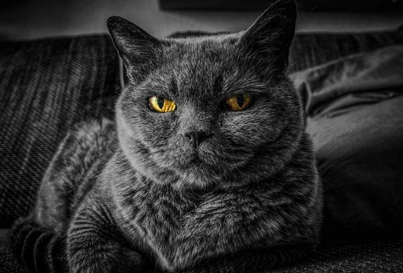 8. Учёные понимают, как кошки мурлыкают, но они всё ещё не уверены, почему они так делают в мире, интересно, наука, познавательно, феномен, фото