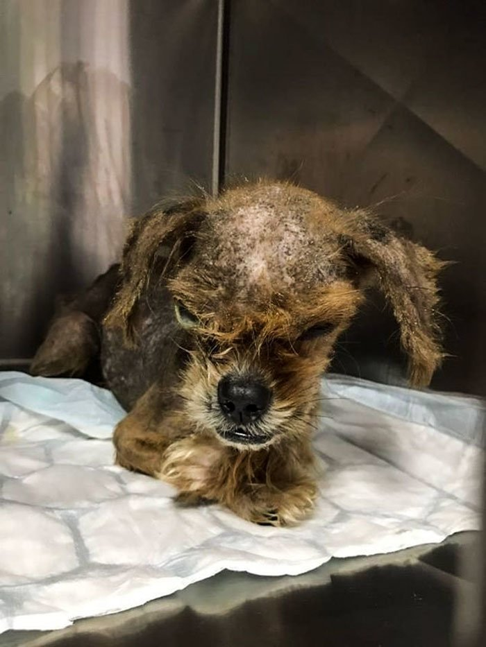 """""""Мы не были уверены, выживет ли он"""" восстановление, животные, лечение, пес, преображение, спасение, хорватия"""