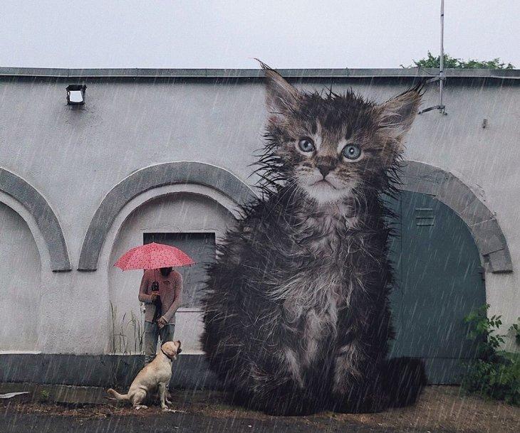 Если бы кошки были большими интересное,кошки,необычное,фотография,фотошоп