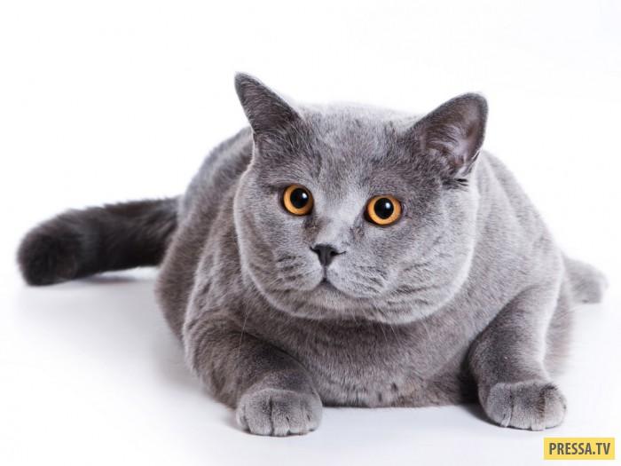 ТОП-30 причин поменять жену на кошку