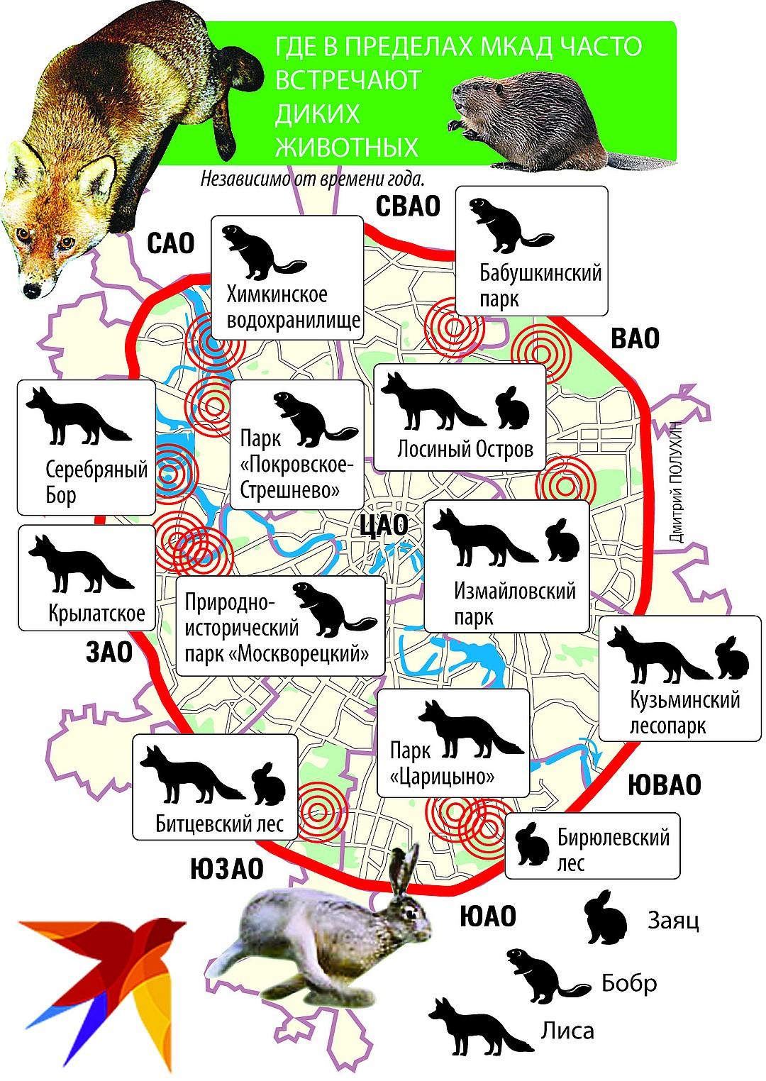 Одними только лисами миграция животных из Подмосковья в Москву не ограничивается Фото: Дмитрий ПОЛУХИН